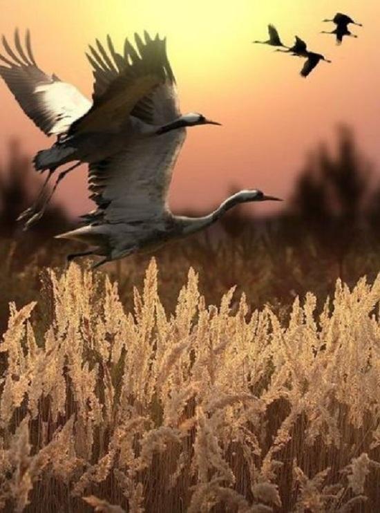 Красивые картинки природы (фото)