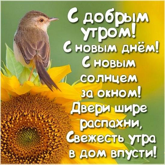 Pozhelanie dobrogo utra i khoroshego dnia