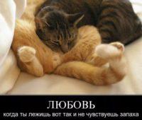 картинки про любовь с надписью (4)