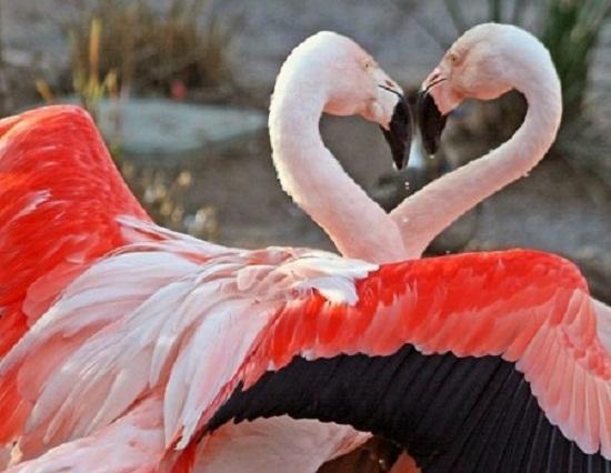красивые картинки про любовь нежность и страсть