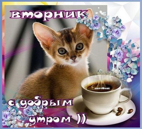 вторник картинки прикольные с надписями доброе утро (2)